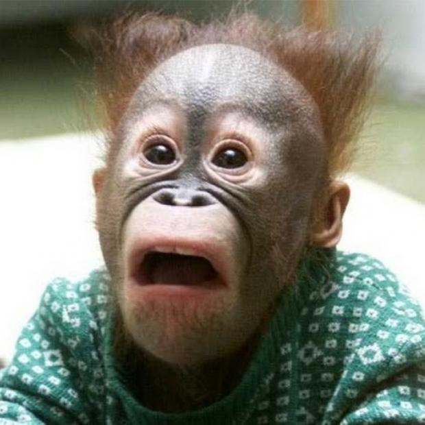surprised monkey face